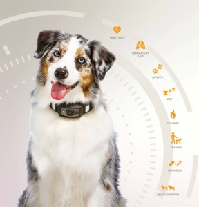 New Technology Helps Us Understand What Dogs Are Trying to Tell Us