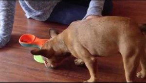 Outward hound Launches New Dog Toys and Games