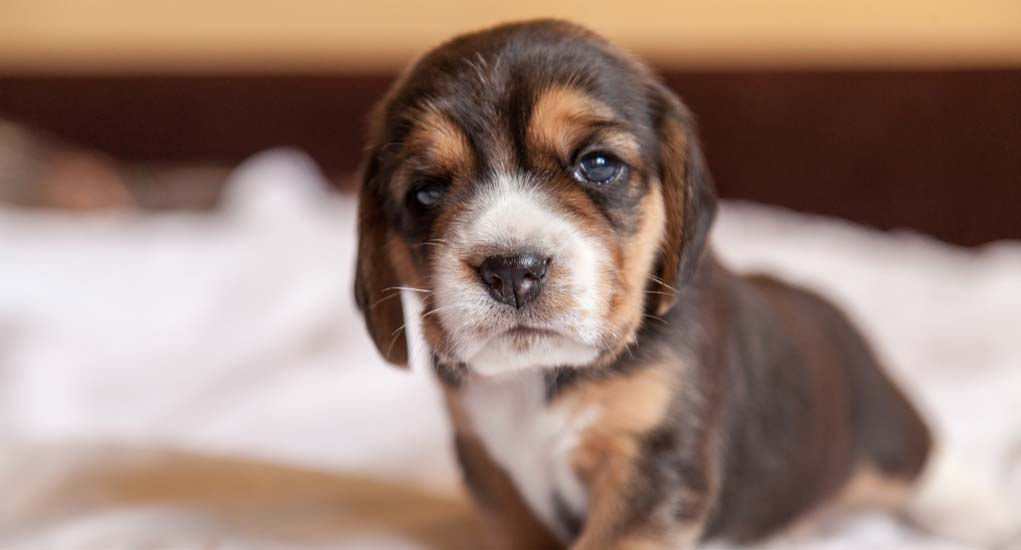 Puppy Training 101 - Obedience Training for Puppies
