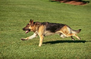 Raw Performance Offers Dog Owners a Much Healthier Alternative to Commercial Kibble