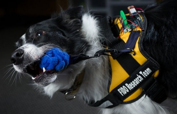 Technologically Advanced Vest Gives Service Dogs an Upgrade