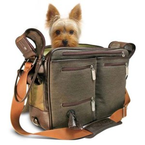 Tips for Traveling with Your Dog