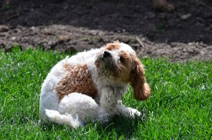 Ways to Minimize Shedding in Dogs
