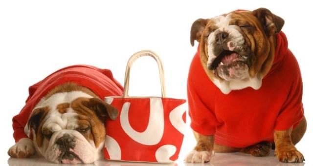 10 Crazy Unique Dog Supplies Pet Parents Buy for their Dogs