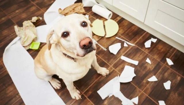 Best Dog Supplies for Solving Bad Dog Behavior Problems