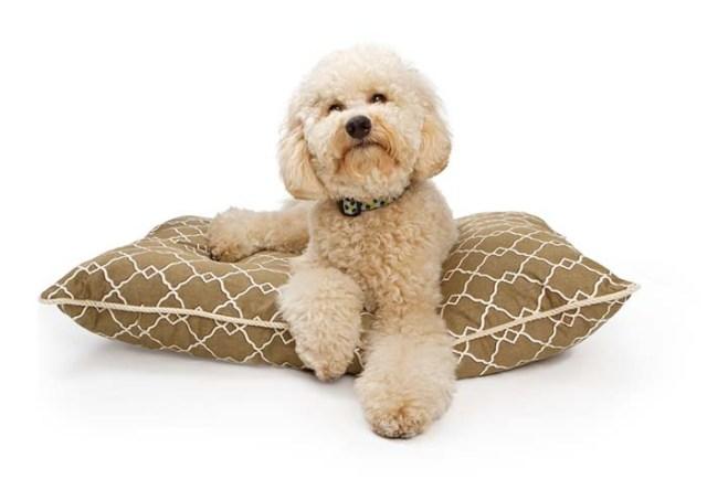 Best Type of Dog Bedding