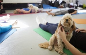 Doga is Making Working Out A Lot More Fun