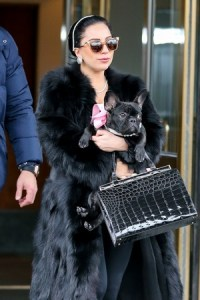 Lady Gaga To Launch a Dog Product Line