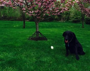 New Company Releases Product to Prevent Dogs From Peeing on Trees