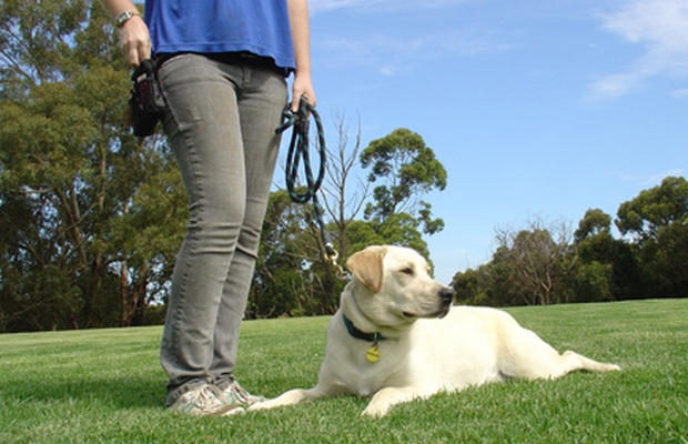 New Products Helps Keep Your Dog Focused While Training