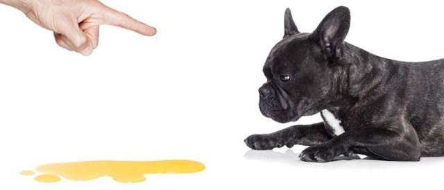 Puppy pee training problems