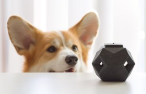 Up Dog Toys Has A New Puzzle Toy In the Works