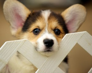 Where to Buy a Dog - Responsible Adoption