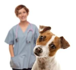 professional help on dog breeds