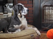 Bedtime Basics Why Your Dog Needs a Dog Bed