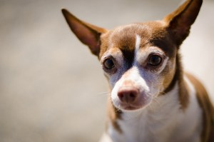 Do Dog DNA Tests Work? How Accurate Are They?