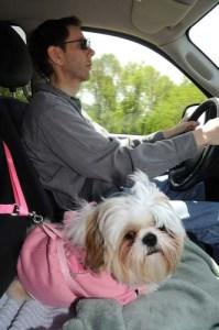 Doggie Chauffeur Business Idea