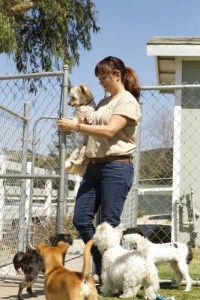 Doggy Daycare Business Ideas