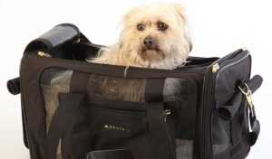 Flying With Dogs - Airline Approved Dog Crates and Carriers