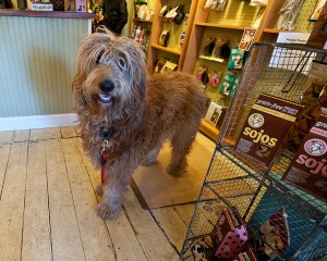How to Launch a Dog Related Pet Business