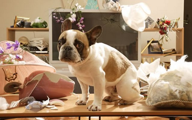 See What Your Dog is Up to with the PetBot