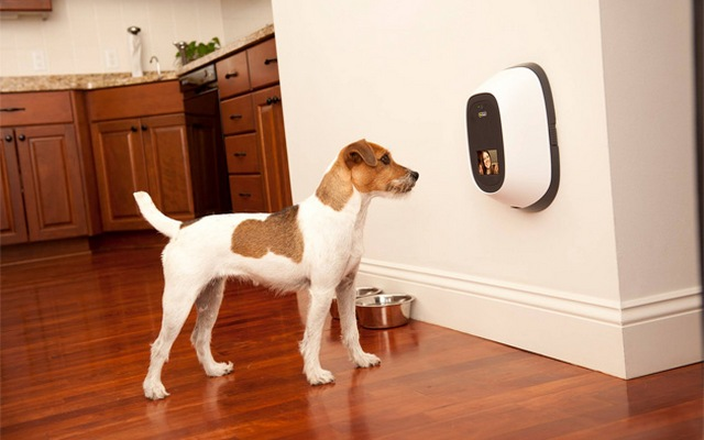 The Company of Animals Offers Pet Owners Some of the Most Innovative Products on the Market