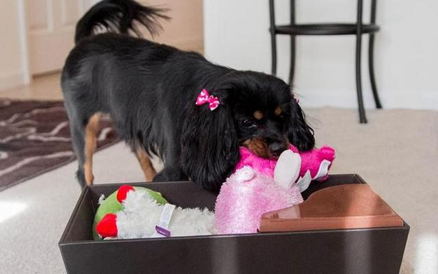 The Tidy Box Trains Your Dog to Pick Up After Themselves
