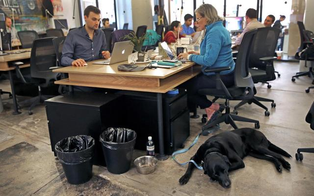 This Tech Firm is Leading the Push to Allow Dogs in Office Buildings