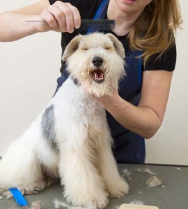 happy dog being groomed
