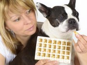 How I Give My Dog Essential Pet Supplements She Do Not Like