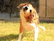 How I Keep My Dog's Skin and Coat Healthy