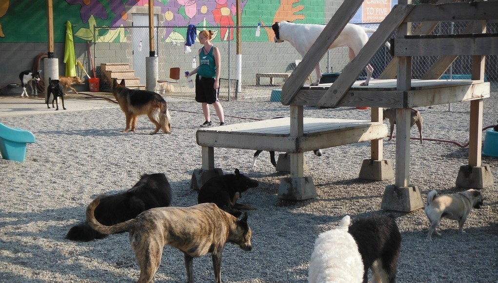 How to Start a Dog Daycare Business
