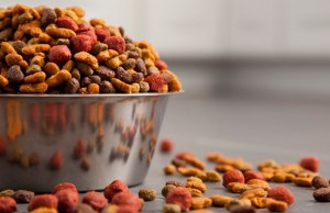Mars is Leading the Way to a Greener Pet Food Industry