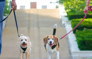 New Smartphone App Connects Dog Owners in Austin, Texas