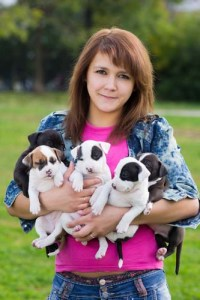 Preliminary considerations before starting a dog breeding business