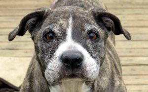 Senior Dogs Deserve a Better Quality of Life
