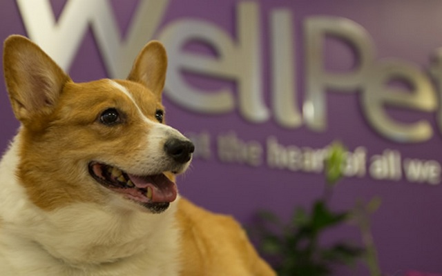 WellPet Excels at SuperZoo 2015