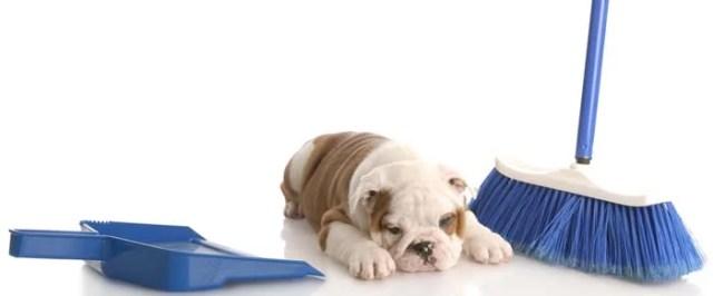housebreaking a puppy