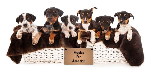 many puppies for adoption