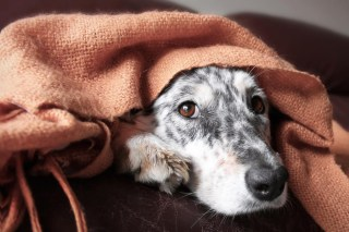 Business and Use of Cannabis in the US Pet Industry - Dogs