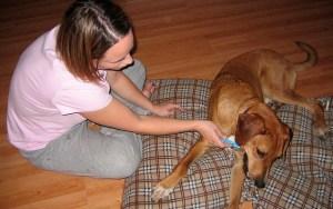 Dog Teeth Cleaning 101