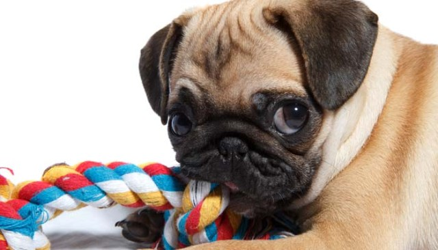 Dog toys are key for dealing with separation anxiety