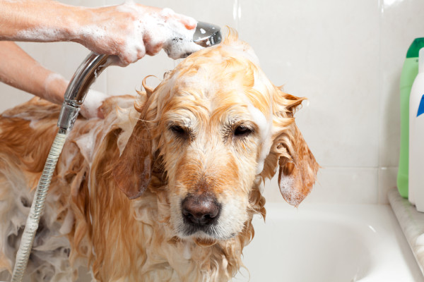 Melanie Newman Salon Essentials Offers Safe and Effective Grooming Supplies