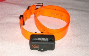 Myths and Facts About Electric Dog Collars