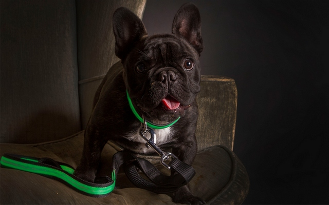 New High-End Pet Product Line Lights Up to Keep Dogs Safe