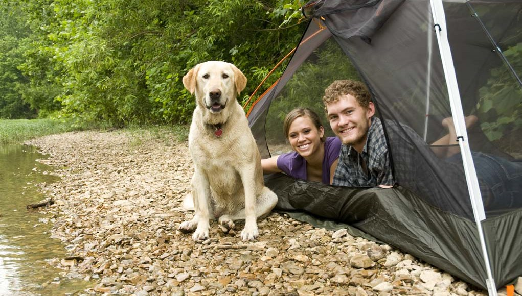 Puppy's First Campsite - Bringing Home to the Outdoors