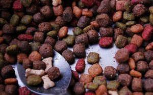 Researchers in Brazil Looking Into Pet Food Processing