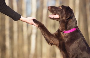 The Business of Dog Training