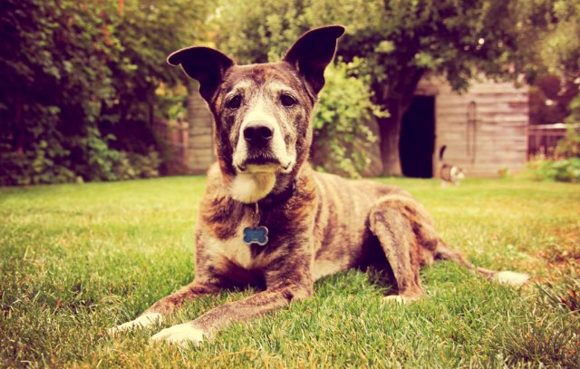 Vet Tips on How to Care for Senior Dogs
