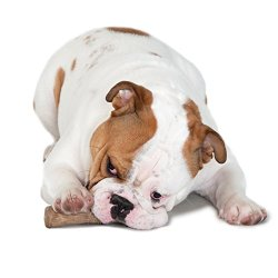 Top 10 Best Dog Chew Toys in 2015